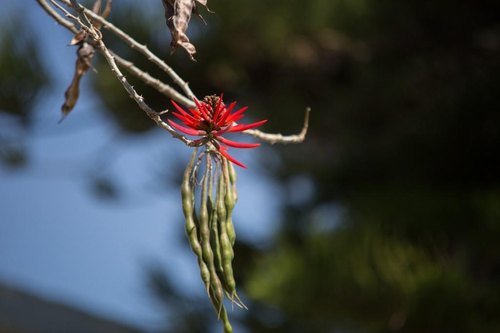 Tintenfischbaum