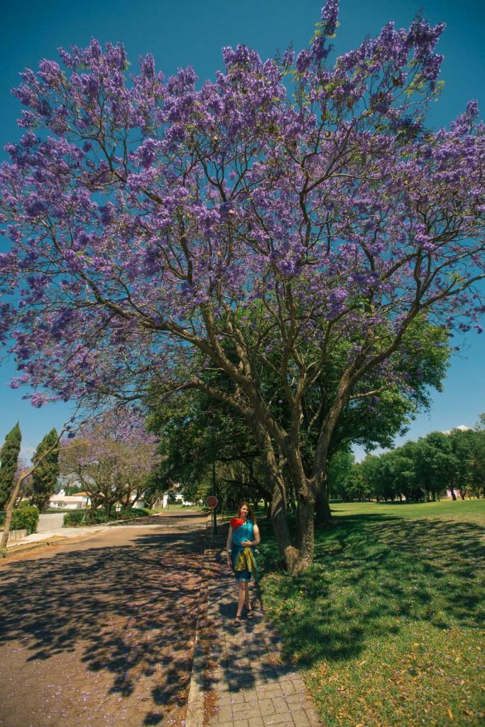 Baum in lila, Myriam aber nicht