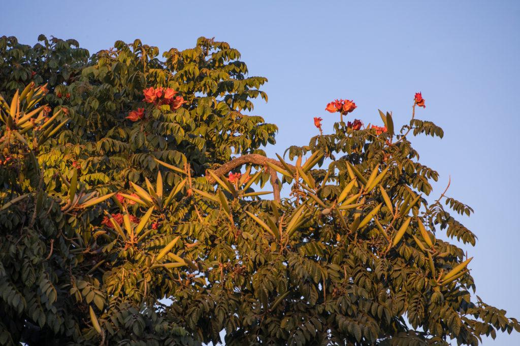 Orange Blüten am Baum