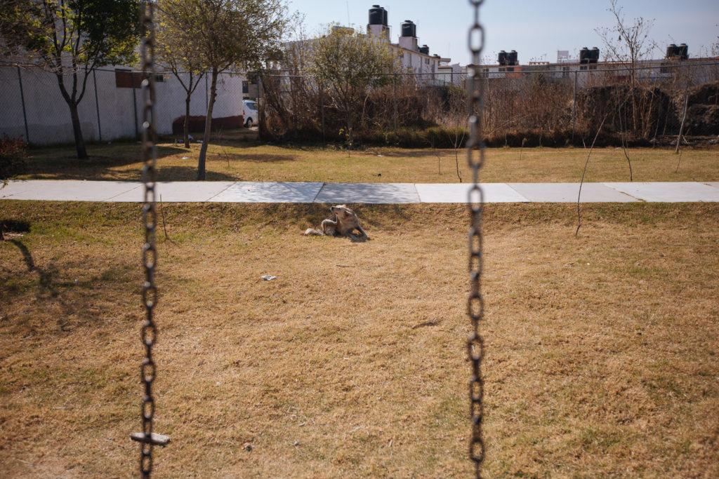 Straßenhund auf dem Spielplatz, El Pilar, Cuautlancingo, Puebla