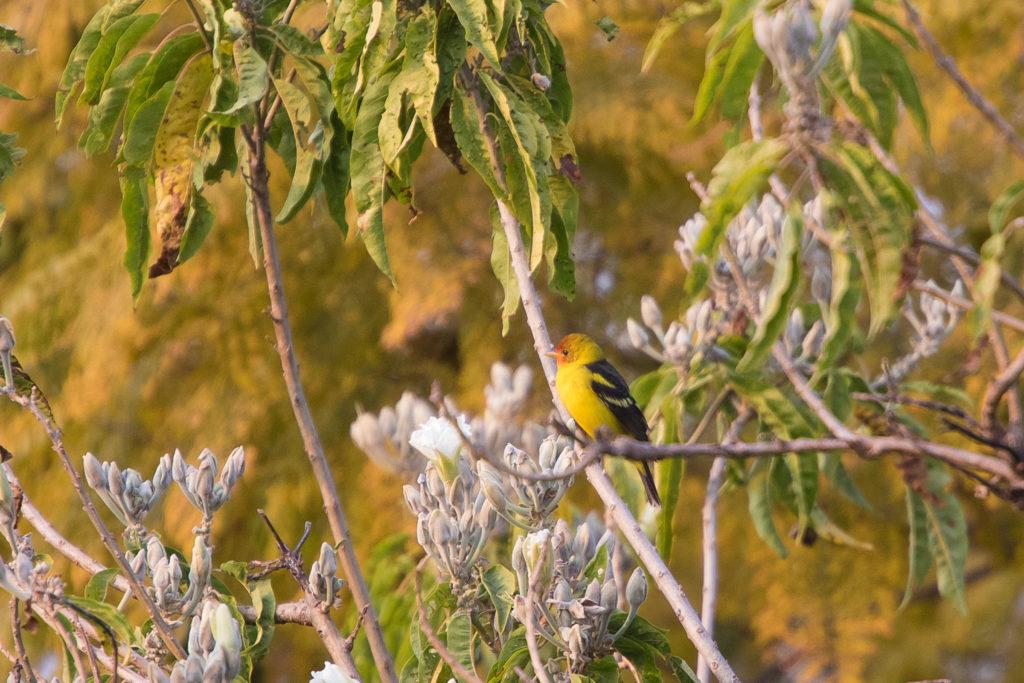 Vogel im Baum neben der Terrasse