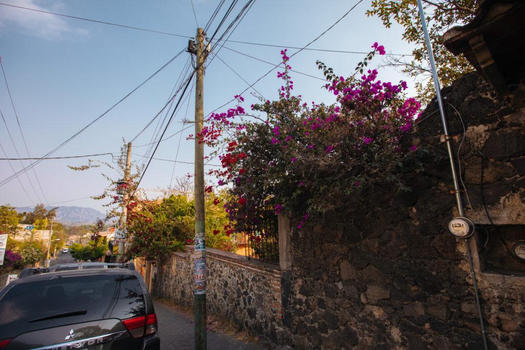 Magnolienbusch am Straßenrand