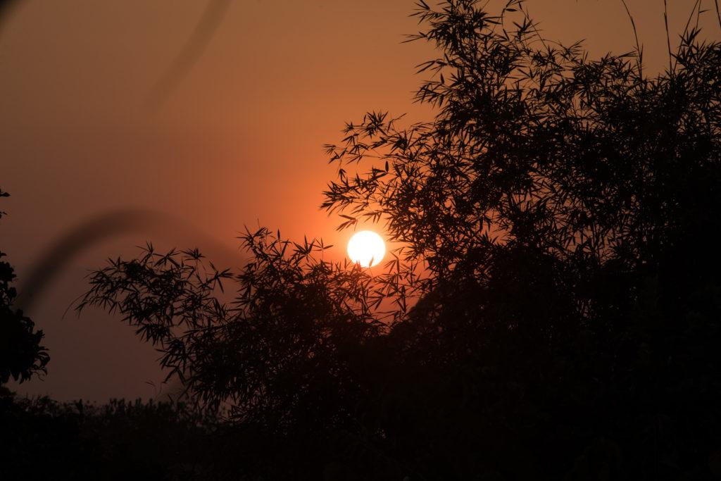 Sonnenuntergang und Baum