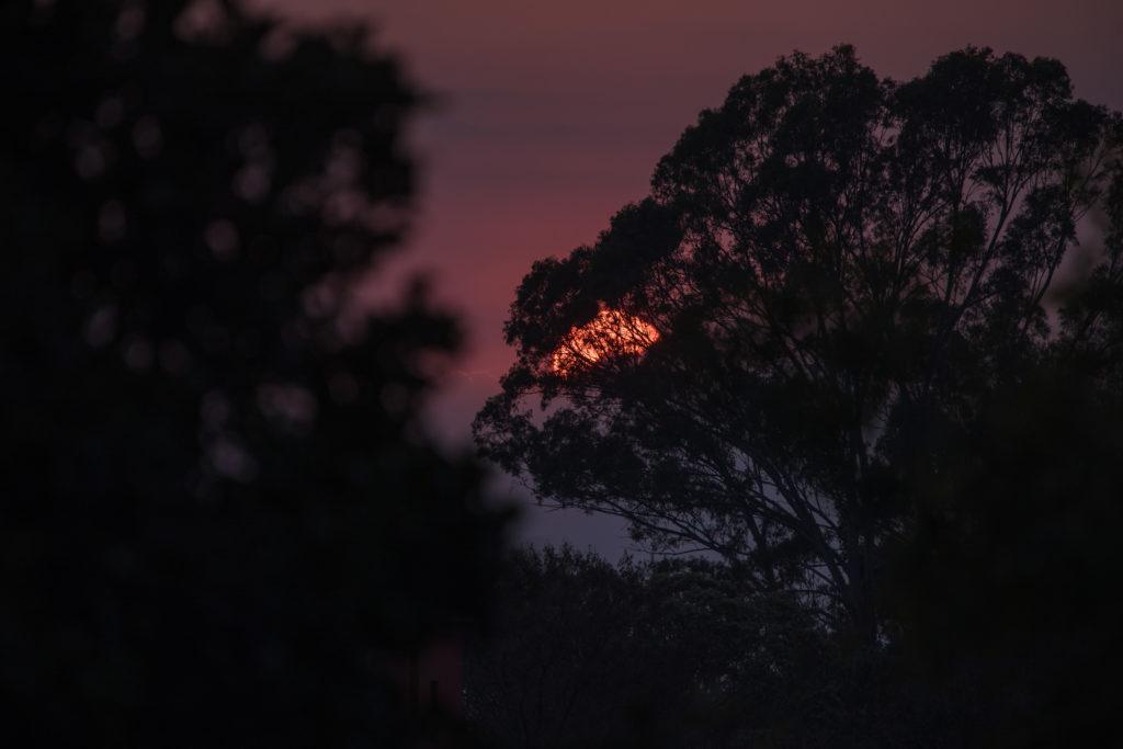 Sonnenuntergang mit anderem Baum