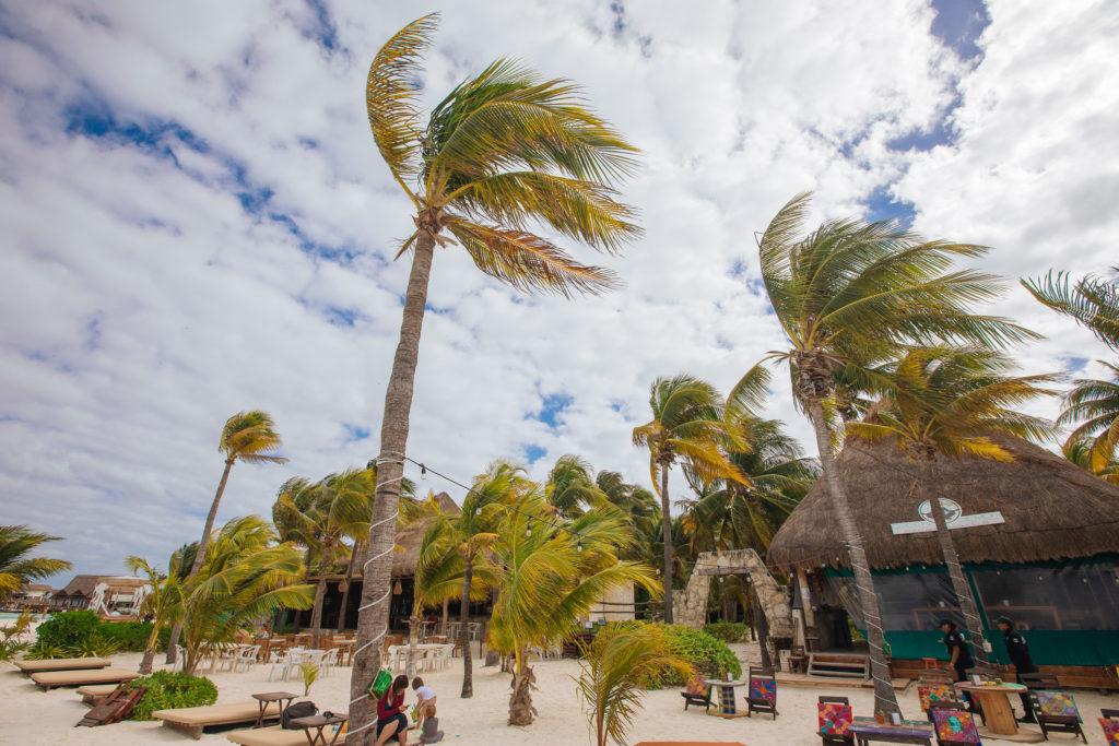 Wolken und im Wind gebeugte Palmen