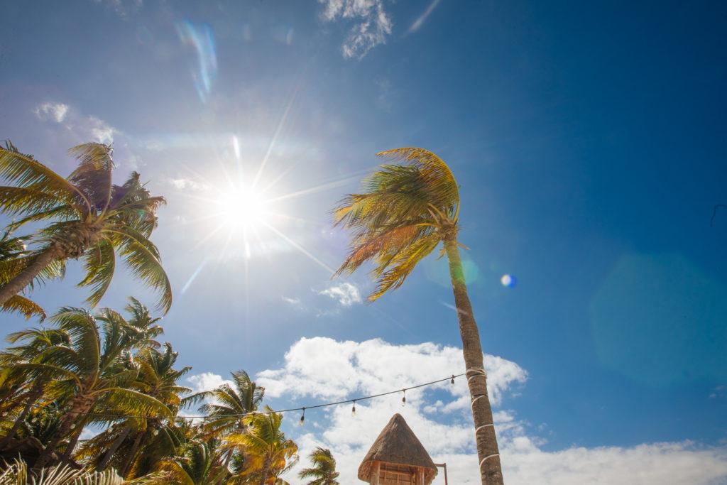 Sonnenstrahlen zwischen den Palmen