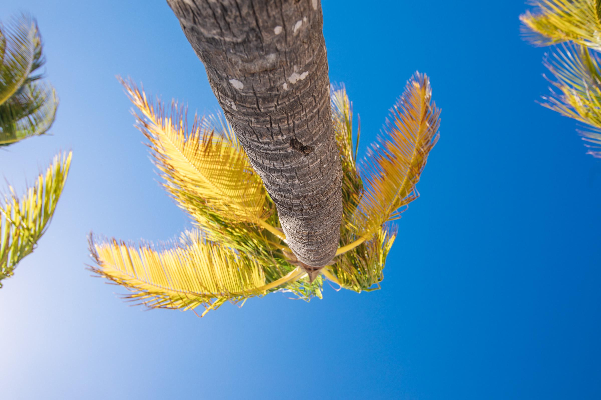 Blick am Stamm einer Palme hinauf