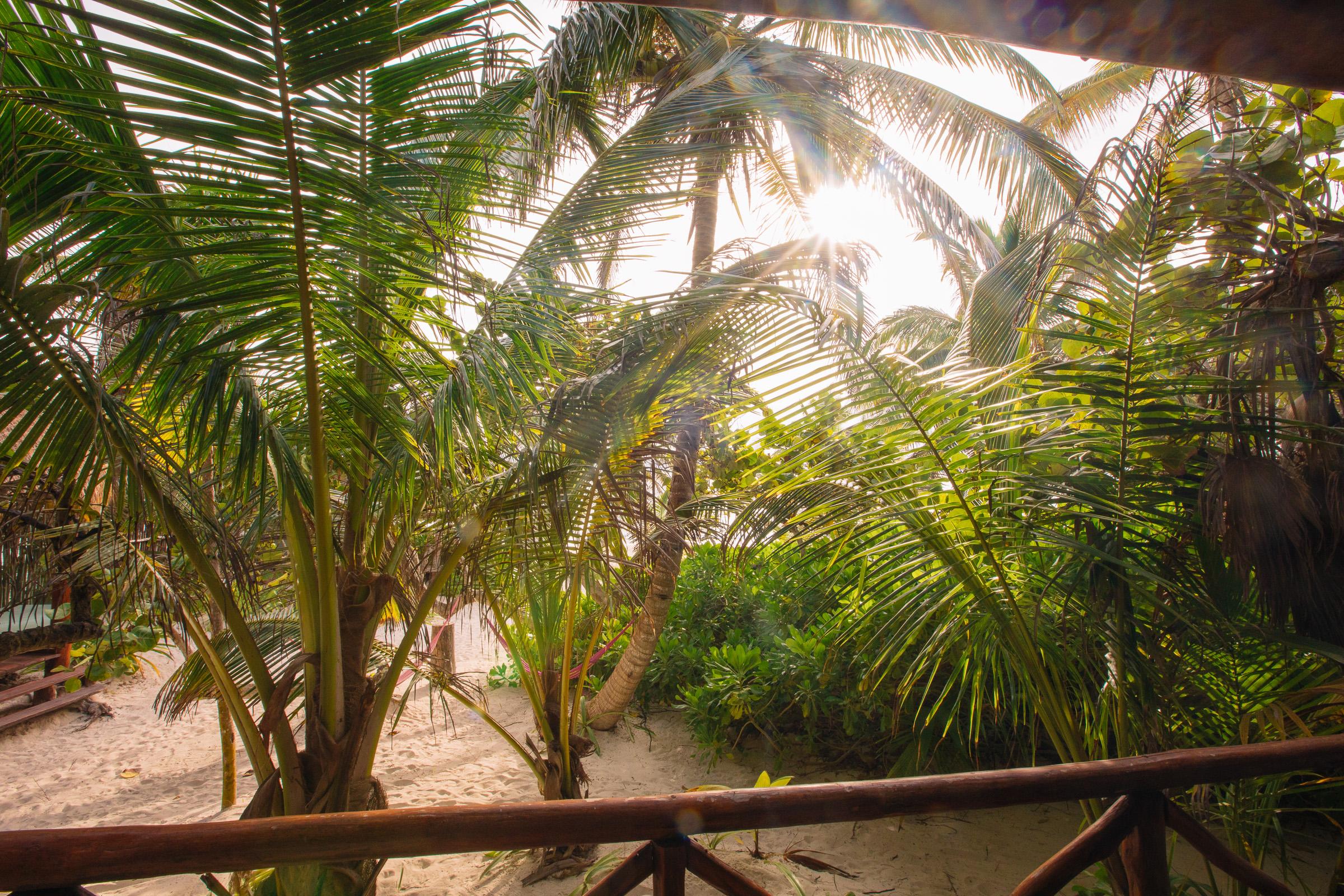 Palmen und Büsche von der unteren Terrasse der Playa Xcanan