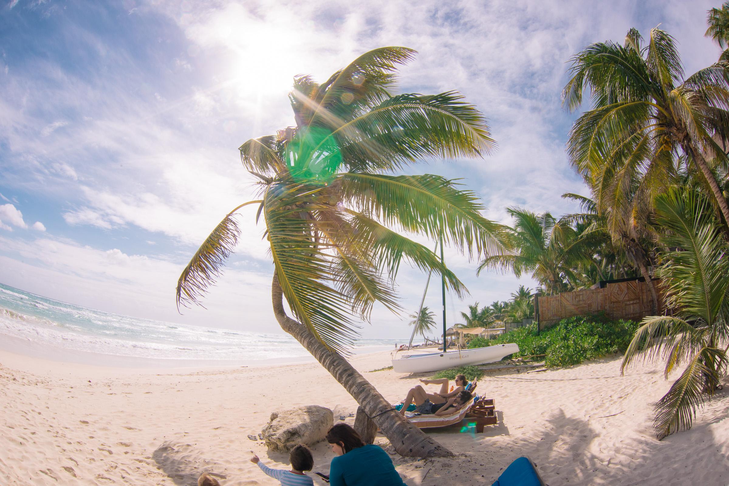 Fisheye-Ansicht von der schiefen Palme vor der Playa Xcanan