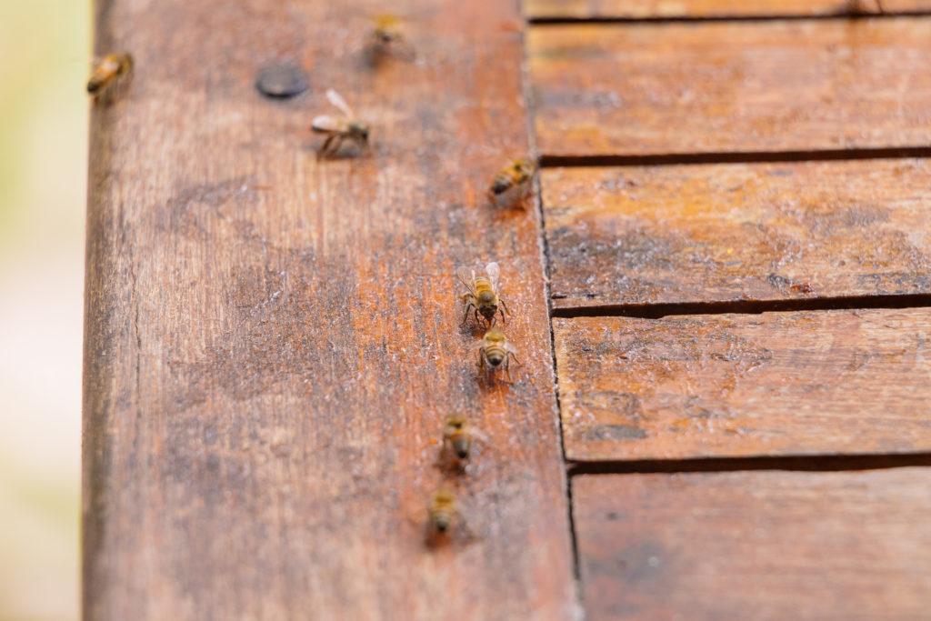 Bienen auf Marmeladenfleck auf dem Verandatisch der Playa Xcanan