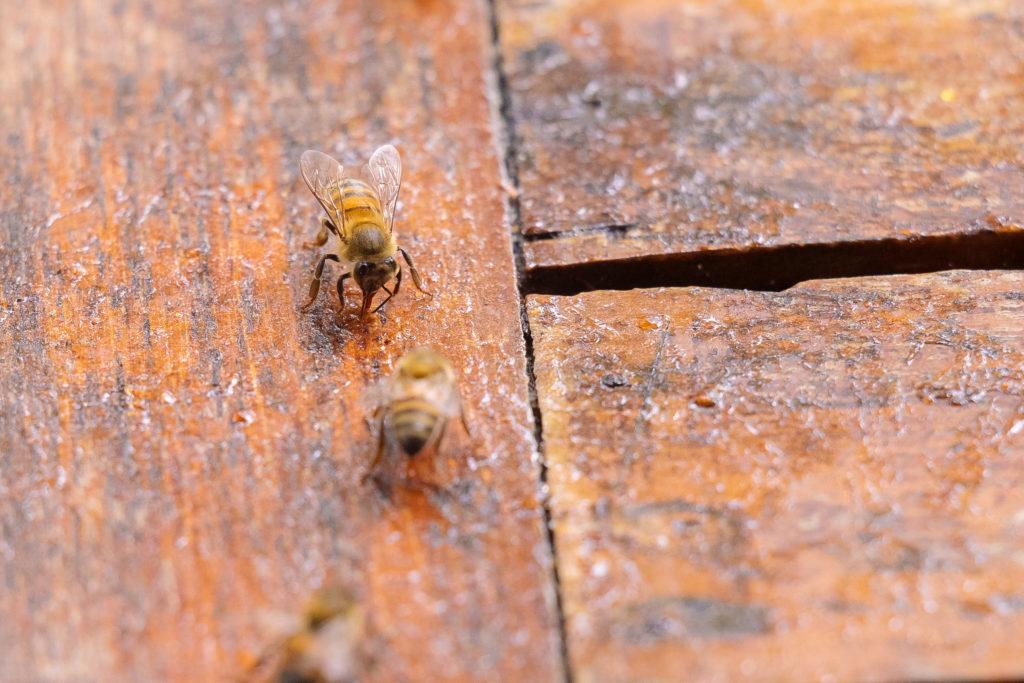 Bienen im Marmeladenfleck auf dem Terrassentisch der Playa Xcanan in Nahaufnahme
