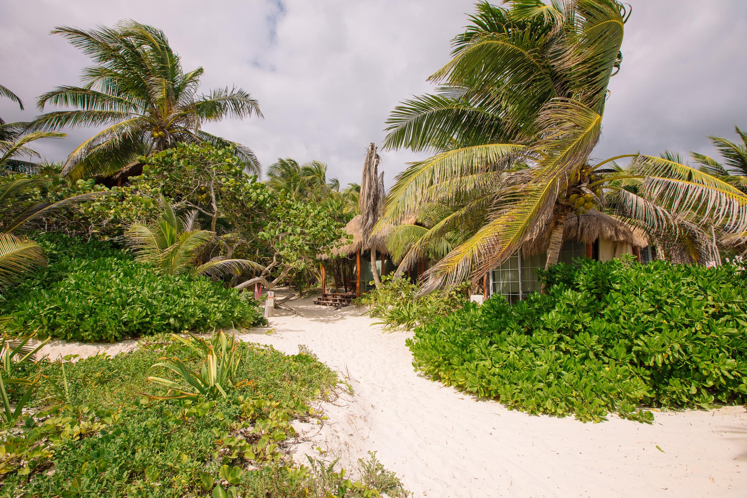 Büsche und Palmen bei Playa Xcanan