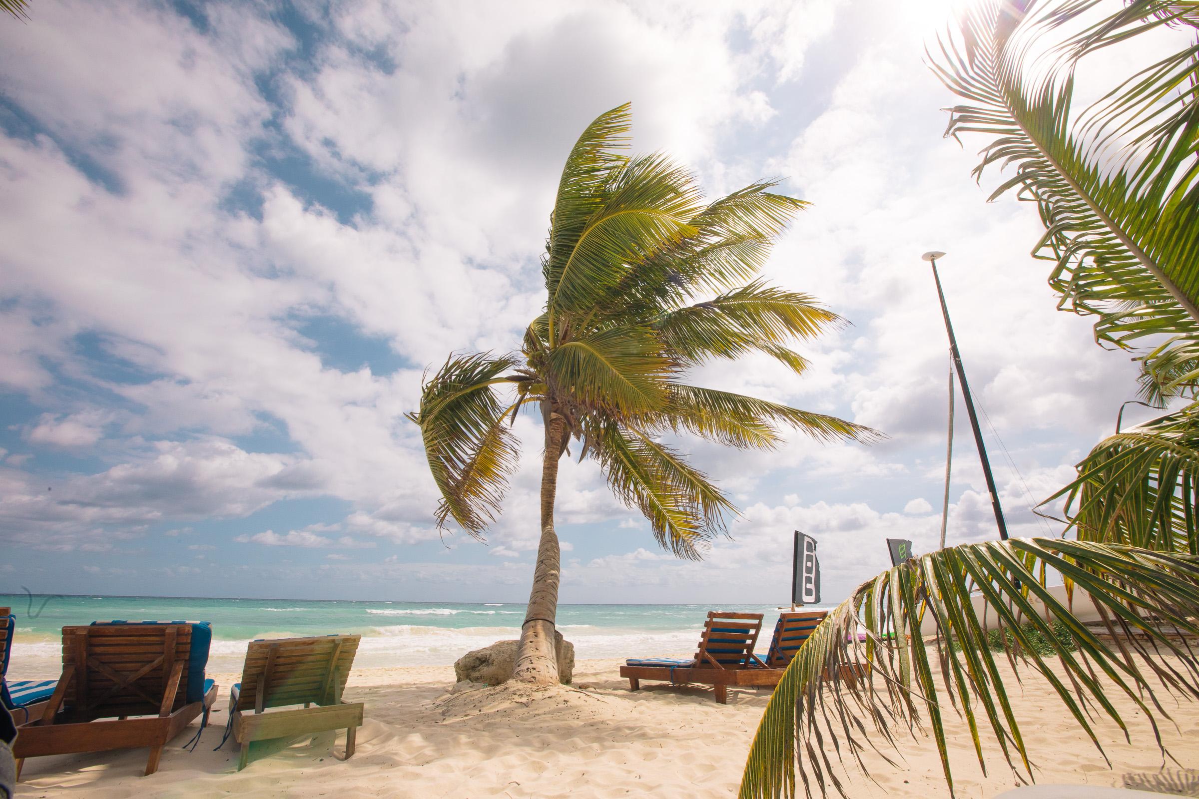 Schiefe Palme bei mäßigem Wetter