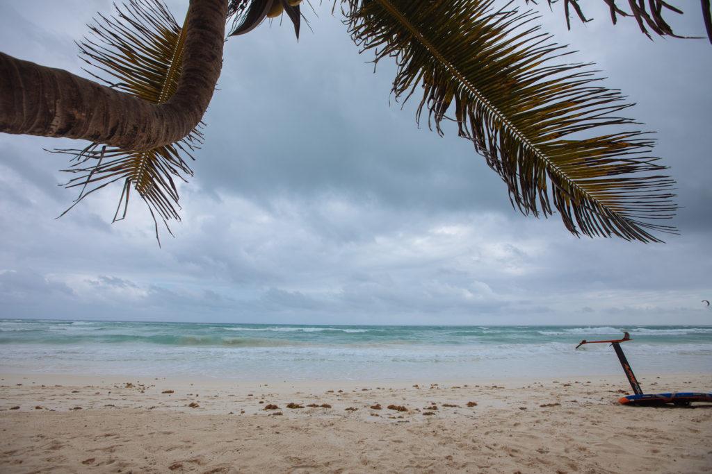Düsterer Himmel von unter einer Palme heraus gesehen