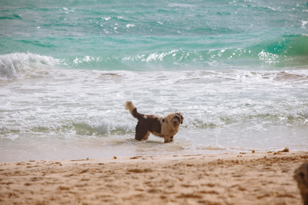Zottelhund im karibischen Meer in Tulum