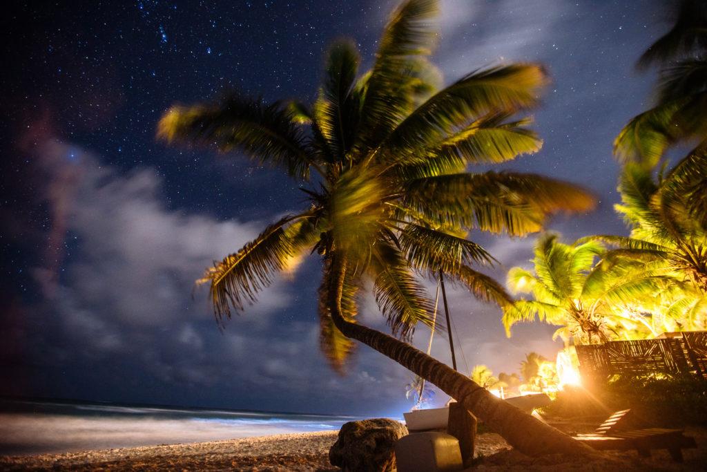 Schiefe Palme abends im Dunkeln mit Sternenhimmel