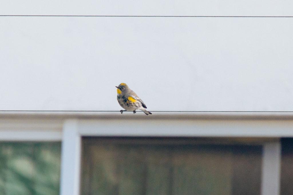 Vogel mit gelben Flecken