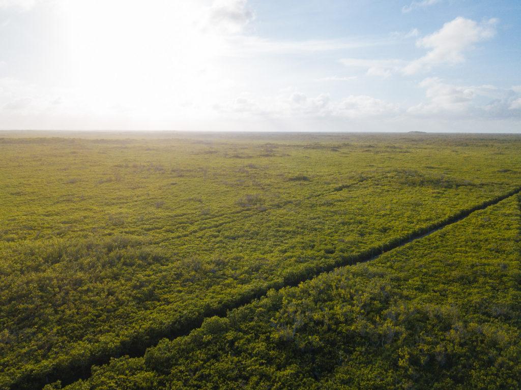 Schneise im yukatekischen Dschungel mit der Drohne gesehen