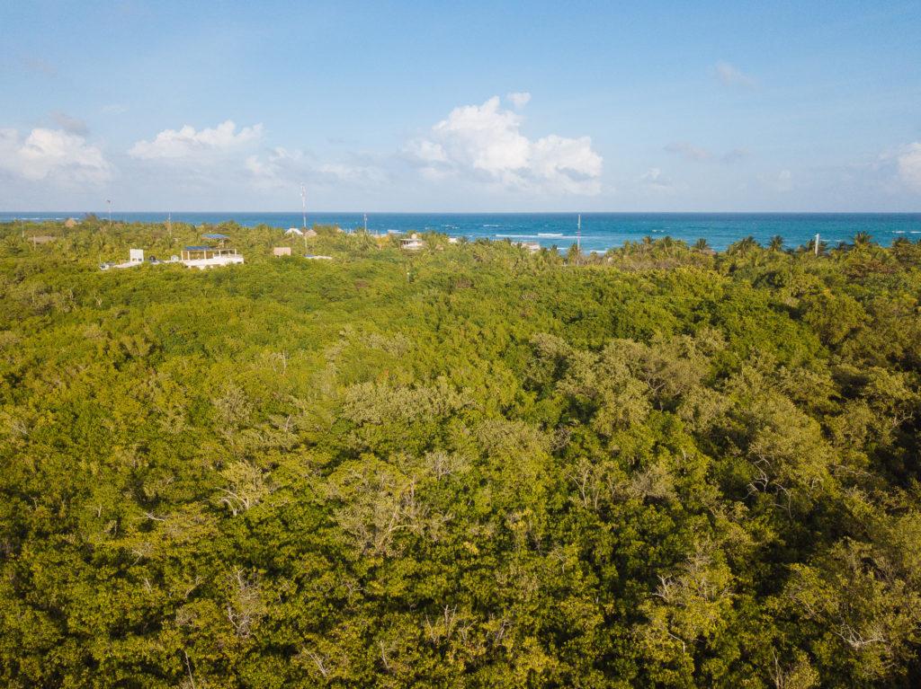 Dschungel mit Meer und Palmen im Hintergrund