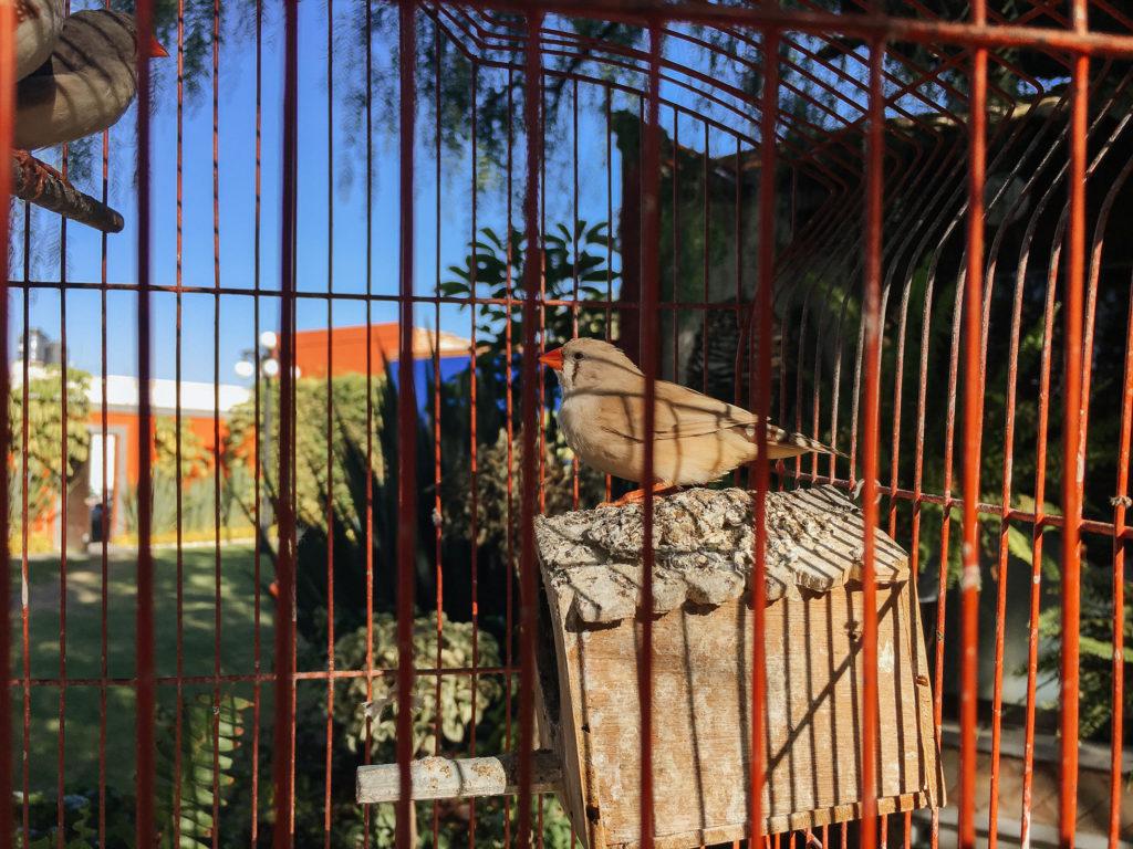 Vogel im Käfig, Ciudad Sagrada, Cholula