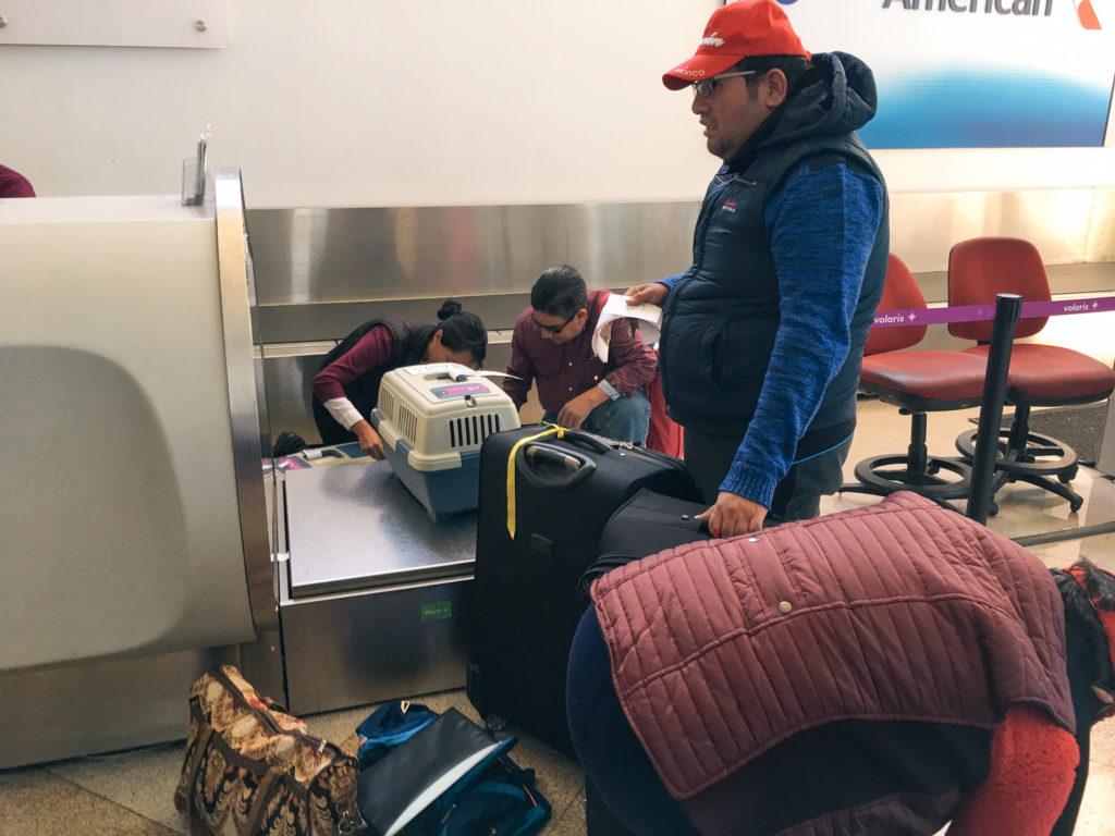 Völlig überforderte Hundeabfertigung am Flughafen Puebla