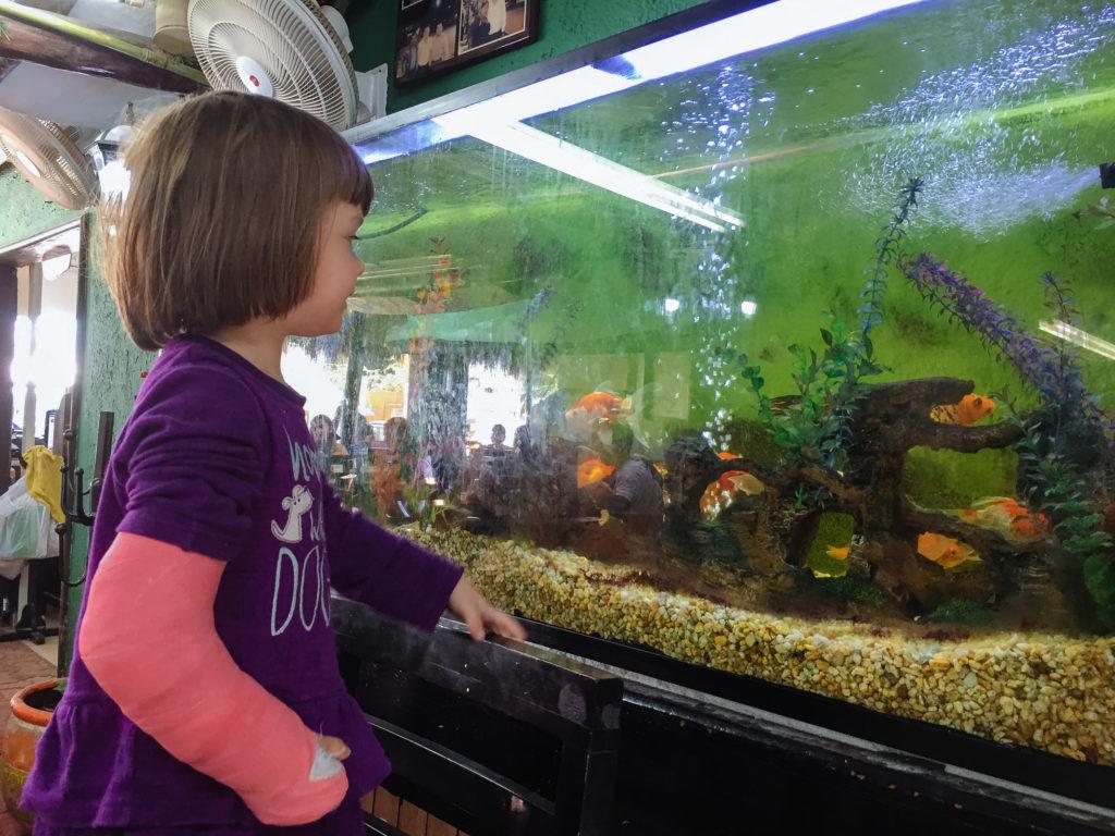 Töchterlein mit pinkem Gips beschaut Aquarium im Don Caféto Tulum
